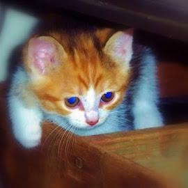 by Samantha Linn - Animals - Cats Kittens