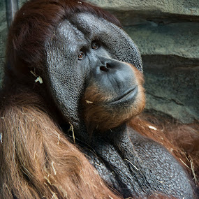 Contemplation by Gene Myers - Animals Other Mammals (  )