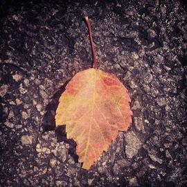 Alone by Supratip Banerjee - Nature Up Close Leaves & Grasses