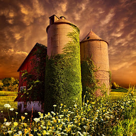 Stillness Of Dawn by Phil Koch - Buildings & Architecture Other Exteriors ( vertical, wisconsin, ray, ivy, phil koch, landscape, spring, photography, sun, photooftheday, love, wicounties, farm, sky, barn, nature, tree, vines, bestoftheday, horizons, flower, instagood, follow, clouds, park, green, twilight, horizon, scenic, queens anne's lace, silo, shadows, wild flowers, field, picoftheday, red, fog, sunset, meadow, landscapephotography, trees, beam, sunrise, landscapes, floral, mist )