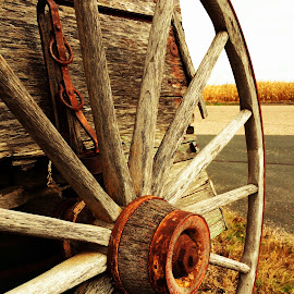 Rusted wagon wheel by Tiffany Ches - Transportation Other ( field, wheel, rusted, wagon wheel, wagon, rusty, rust, weathered,  )