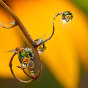 The Cyclop by Chandra Irahadi - Abstract Water Drops & Splashes ( reflection, drops,  )