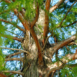 Beautiful shades of bark. by Gaynel . - Nature Up Close Trees & Bushes