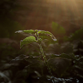 Photosynthesis.............with Sanjit........ by Shubhra Sau - Nature Up Close Other Natural Objects