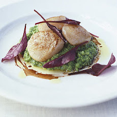 Scallops With Pea & Mint Purèe