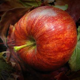 The Royal Gala Apple by Janet Herman - Food & Drink Fruits & Vegetables ( fruit, royal gala apple, gala, apple, food )