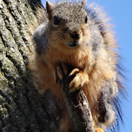 Squirrel on a broken branch by Theresa Campbell - Novices Only Wildlife