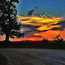 all the colors by Zeralda La Grange - Instagram & Mobile iPhone ( #landscape, #orange, #blue, #yello, #sunset, #sun, #tree )