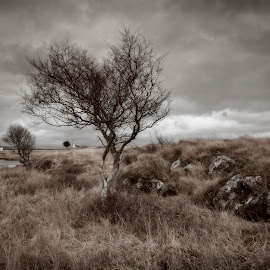 Lone Tree, Mull by Ian Pinn - Landscapes Cloud Formations ( scotland, tree, weather, cloudy, mull, rain )