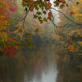 Autumn Reflected by Michael Kight - Landscapes Forests ( water, foggy, autumn, fog, fall, trees, blue ridge parkway, leaves, fall color, linville river )