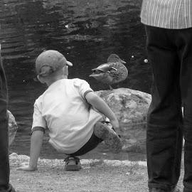 ... by Daniel Gaudin - People Street & Candids ( camera, art, duck, people, kid )