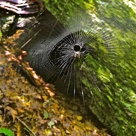 Spider web with iPhone by Tyrell Heaton - Instagram & Mobile iPhone ( web, spider, iphone )