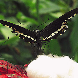 by Shubhra Sau - Animals Insects & Spiders