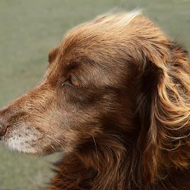 Tubaína :) by Vera Vilela - Animals - Dogs Portraits (  )