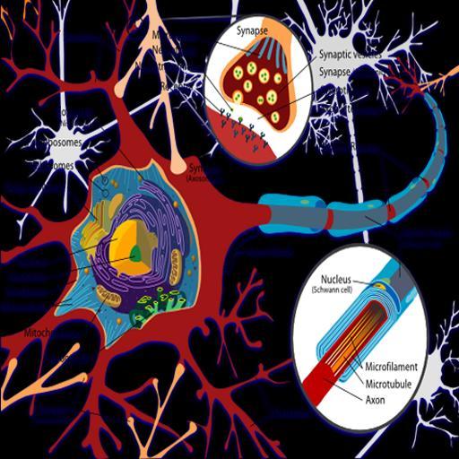 Behavioral Neuroscience 書籍 App LOGO-APP試玩