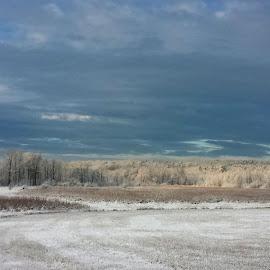 Early morning Frost by DeDe PalmerWells - Landscapes Prairies, Meadows & Fields ( field, winter, snow, meadow, frost, frozen,  )