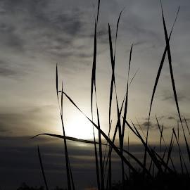 Gila River Sunrise by Ken Mickel - Novices Only Landscapes ( sunrises, silhouette, arizona, silhouettes, sunrise )