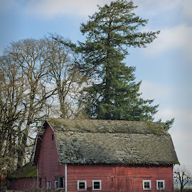 Red Barn in Winter by Kevin Brown - Buildings & Architecture Other Exteriors ( willamette valley, oregon, eps, red barn, winter, nnp, afternoon, _places, nortb, junction city )