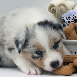 Dreaming Of Bones by Kristi Muck - Animals - Dogs Puppies
