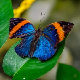 Butterfly by Steiven Poh - Novices Only Wildlife (  )