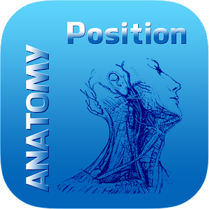 Human Anatomy Position