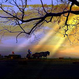 Baling Hay the Amish Way by Julie Dant - Transportation Other ( amish scenes, amish horses, amish farming, baling hay, sunset, horse teams, indiana amish., farm scenes, farming, work horses )