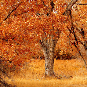 Lonely Tree by Ruth Jolly - Nature Up Close Trees & Bushes ( bosque del apache, tree, nature, autumn, seasons, foliage, fall, trees, leaf, leaves,  )
