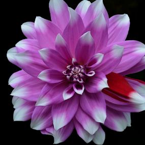 Mutant by Jeanne Knoch - Flowers Single Flower ( , creativity, lighting, art, artistic, purple, mood factory, lights, color, fun, colorful, vibrant, happiness, January, moods, emotions, inspiration )