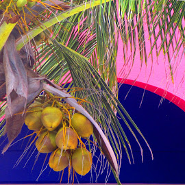 ISLAND COLOR by Walter Carlson - Nature Up Close Gardens & Produce ( palm, tree, coconut, color, cruise, cribbean, island )