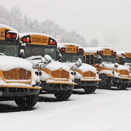 Snowy Busses by Jackie McCorkle Tepe - Transportation Other