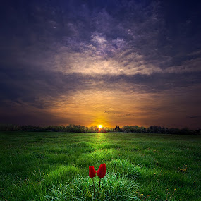 You and I by Phil Koch - Landscapes Prairies, Meadows & Fields ( vertical, photograph, farmland, yellow, storm, leaves, love, sky, tree, nature, autumn, shadow, snow, flower, fields, wind, orange, twilight, agriculture, horizon, portrait, dawn, winter, environment, season, national geographic, serene, trees, floral, inspirational, natural light, wisconsin, tulips, phil koch, spring, sun, photography, farm, ice, horizons, rain, inspired, clouds, office, park, green, scenic, morning, shadows, wild flowers, field, red, blue, sunset, fall, peace, meadow, summer, sunrise, earth, landscapes,  )