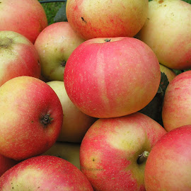 Garden tree apples by Christopher Williams - Food & Drink Fruits & Vegetables ( tree, autumn, apples, house, garden )