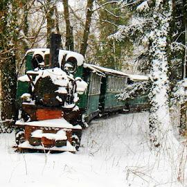 Litlle old train.. Ćiro! by Željko Salai - Transportation Trains