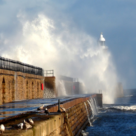 the sea power  by Paul Pirie - Landscapes Weather ( tide, wave, sea, pier, stone, wall, coast )