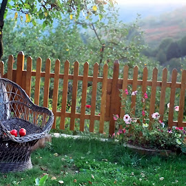 Merele by Vis DeNoapte - Nature Up Close Gardens & Produce ( aple, mere, gradina )