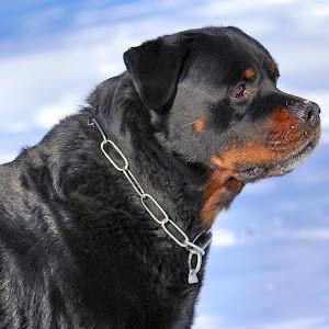 dogb4_.jpg