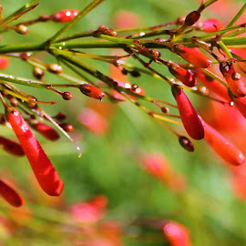 by Denise Dunkley Hall - Nature Up Close Other plants (  )