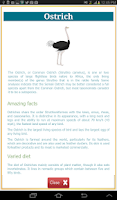 Screenshot of Learning Birds