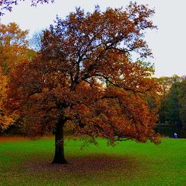 Utumn - Zagreb,Maksimir park* by Ana Zec - City,  Street & Park  City Parks
