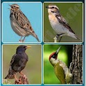 4 Songbird Quiz Games icon