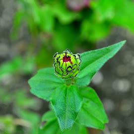 by Banica Razvan - Nature Up Close Gardens & Produce