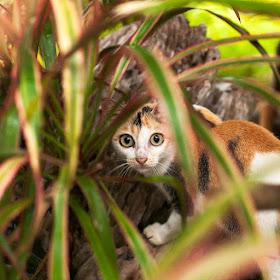 Kucing.jpg
