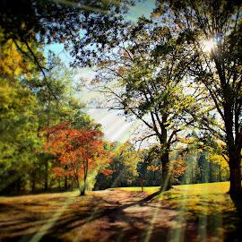 Pigeon Hill Trail by Michael Gonzalez - Landscapes Forests ( battlefield, kennesaw georgia, fall season, sun reflection, marietta georgia, trail, civil war, pigeon hill, fall peak, hiking )