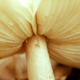 by Samual Davis - Nature Up Close Mushrooms & Fungi