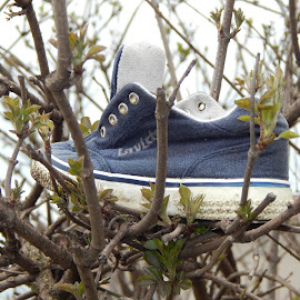 Shoe on the tree by Glas Nevinih - Artistic Objects Clothing & Accessories ( nature, tree, shoe,  )