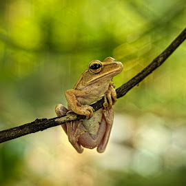 Hanging Out by Yudha Aja - Animals Amphibians