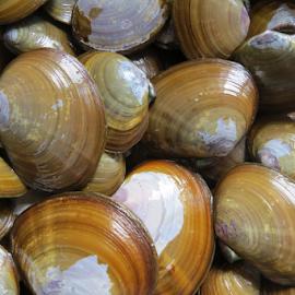 Purple varnish clams by Howard Skaggs - Food & Drink Ingredients