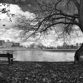 The flirtation between the bench and the tree by Jil Norberto - City,  Street & Park  City Parks ( tree, bench, black and white, 1 - landscape, river,  )