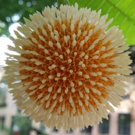by RAJ JAIN - Nature Up Close Gardens & Produce