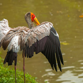 Break The Rules by Brothers Photography - Animals Birds ( bird, wild, stork, break the rules, wildlife, water birds, birds, animal,  )